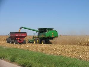 Combing Corn